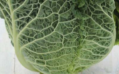 Super Foods – Cabbage