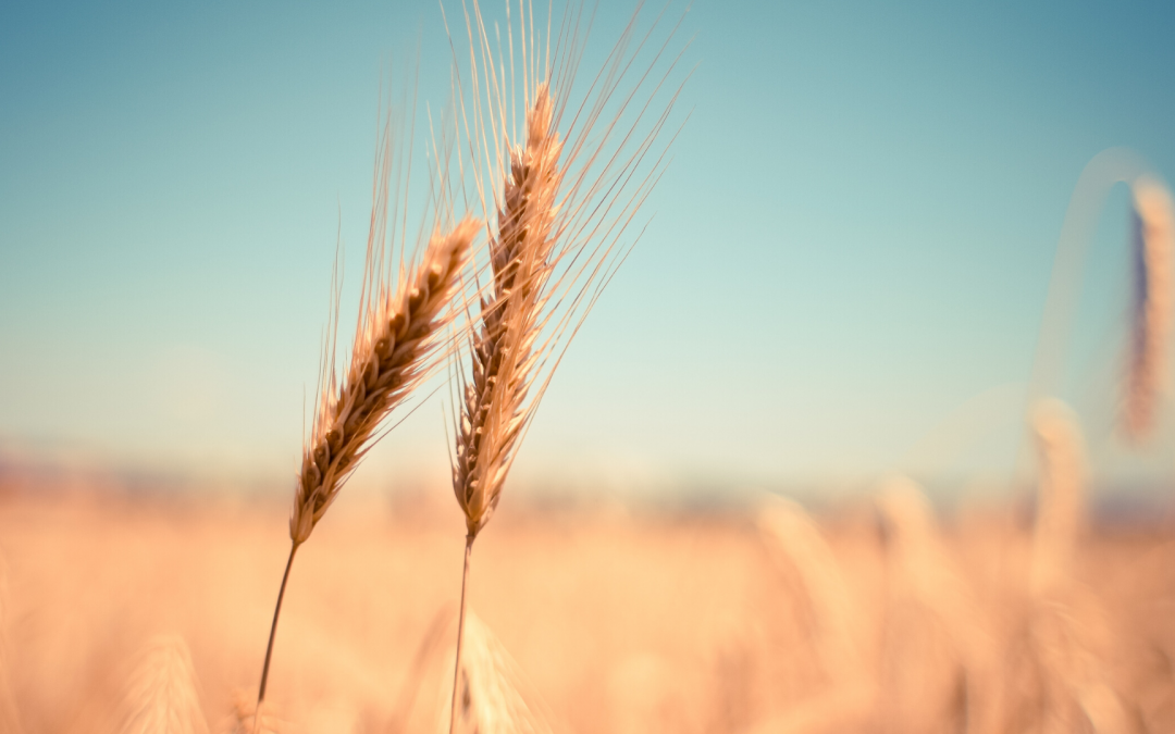 Tips for living with a wheat intolerance