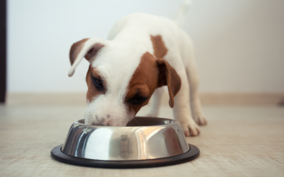 Home-Made Allergy-Friendly Pet Food